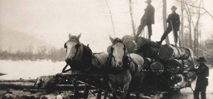 Boundary Logging Camps